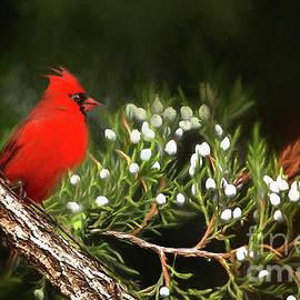 Darren Fisher - Virginia State Bird