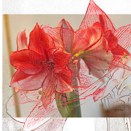 Gretchen Wrede - Visions of Red Amaryllis at Christmas
