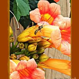 Bobbee Rickard - Visiting Bee