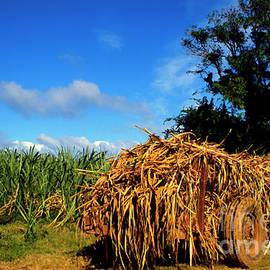 Thomas R Fletcher - Wagon Loaded with Sugarcane