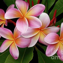 Sharon Mau - Wailua Sweet Love Texture