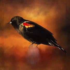 Jordan Blackstone - Waiting - Bird Art