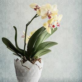 Maggie Terlecki - Waiting for Spring