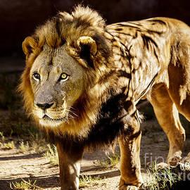 Jerry Cowart - Walk On The Wild Side