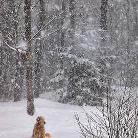 Elizabeth Dow - Walking in a Winter Wonderland