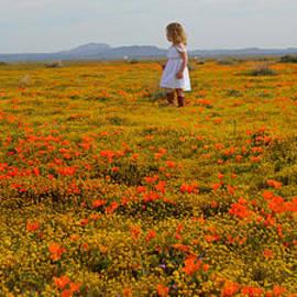 Norma Warden - Walking in Poppies