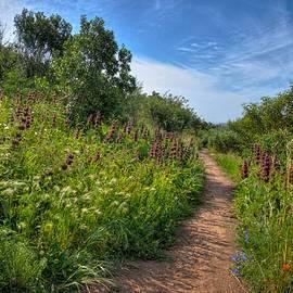 Lynn Bauer - Walking in Wildflowers