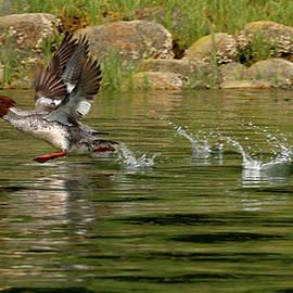 Inge Riis McDonald - Walking on Water