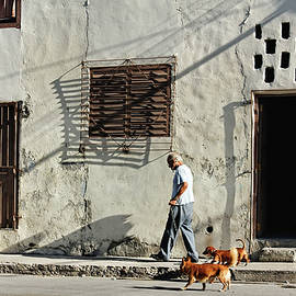 Dawn Currie - Walking the Dogs