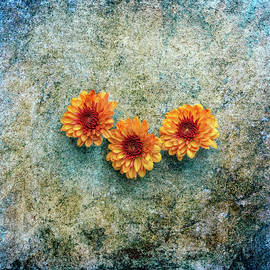 K Powers Photography - Wall Flowers