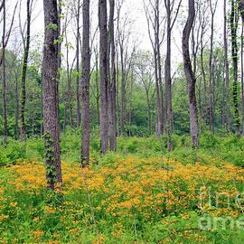 Steve  Gass - Walnut Tree Plantation
