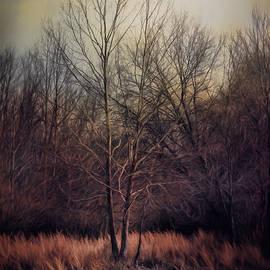 Jai Johnson - Warm Winter Peace
