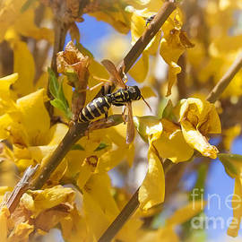Janice Rae Pariza - Wasp and Beetle