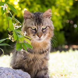 Daphne Sampson - Watchful Cat Beauty