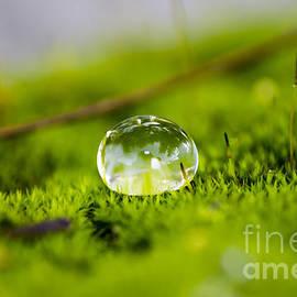 Julio Haro - Water Drop