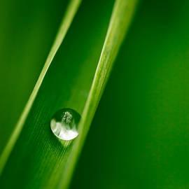 Philip Steury - Water Droplet
