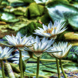 Allen Beatty - Water Lilies 10