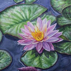 Fiona Craig - Water Lilies 15 Sunfire