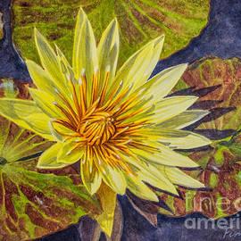 Fiona Craig - Water Lilies 2