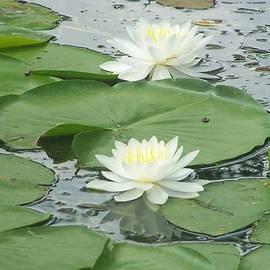 Charlotte Gray - Water Lilies at Conesus Lake