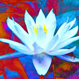 Rich  Ray Art - Water Lilies