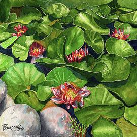 Water Lilies - Timithy L Gordon