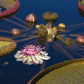 Sally Weigand - Water Lily and Platters
