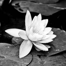 Gordon Wood - Water Lily Flower