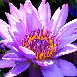 Jeannie Rhode Photography - Water Lily in Purple