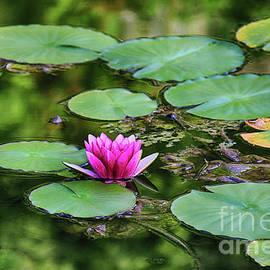 Mariola Bitner - Water Lily