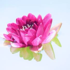 MTBobbins Photography - Water Lily Pastel