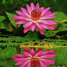 Larry Nieland - Hot Pink Water Lily reflection