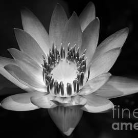 Sharon Mau - Water Lily