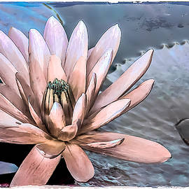 Julie Palencia - Water Lily Vintage Art