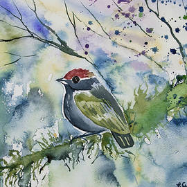 Cascade Colors - Watercolor - Chestnut-crowned Gnateater