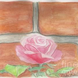 Isabel Proffit - Watercolour Rose