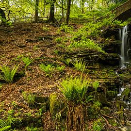 Daniel Kay - Waterfall In The Woods.