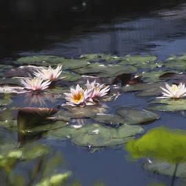 John Rivera - Waterlilies