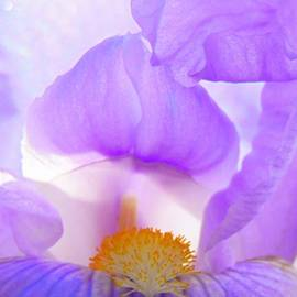 Honey Behrens - Waves of Iris