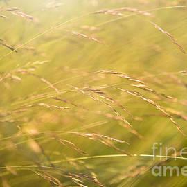 Waving Grass - Diane Diederich