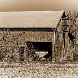 William Sturgell - Weathered Barn and Vines in Sepia