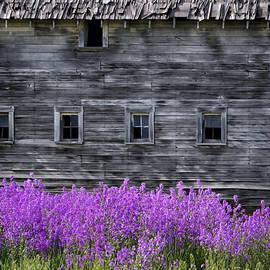 Nikolyn McDonald - Weathered Barn - Flowers