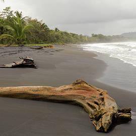 Pete Hendley - Weathered Tree On Costa Rica Beach