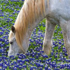 Gary Holmes - Weeding the Garden
