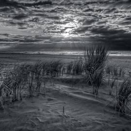 Mike Deutsch - Weeds In The Sunrise