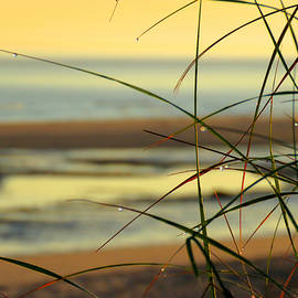 Dianne Cowen - Welcoming Summer