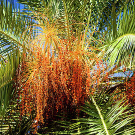West Palm Celebration