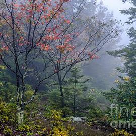 Thomas R Fletcher - West Virginia Highlands in Autumn