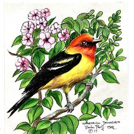 Bob Patterson - Western Tanager