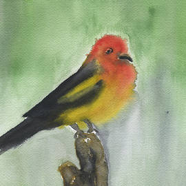 Frank Bright - Western Tanager